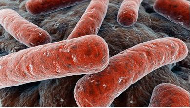 tuberculosis_2